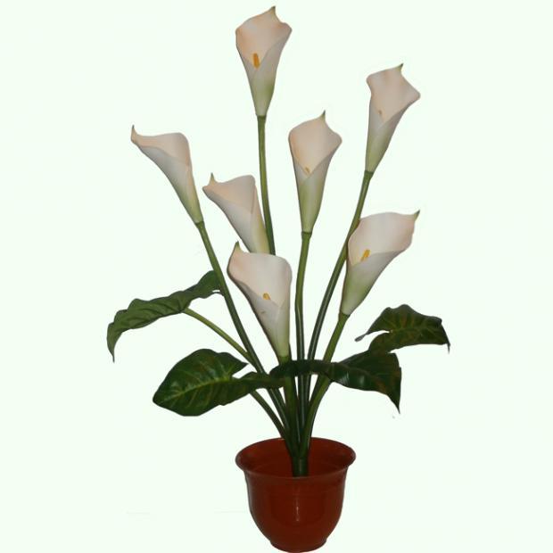 напольные цветы фото: