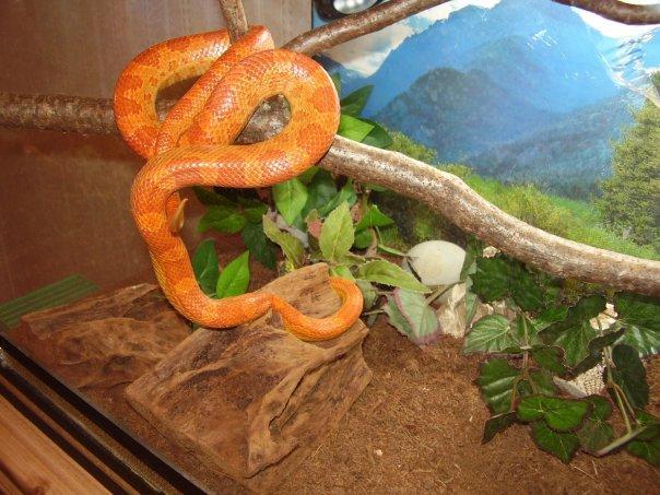 Как сделать домашний змей