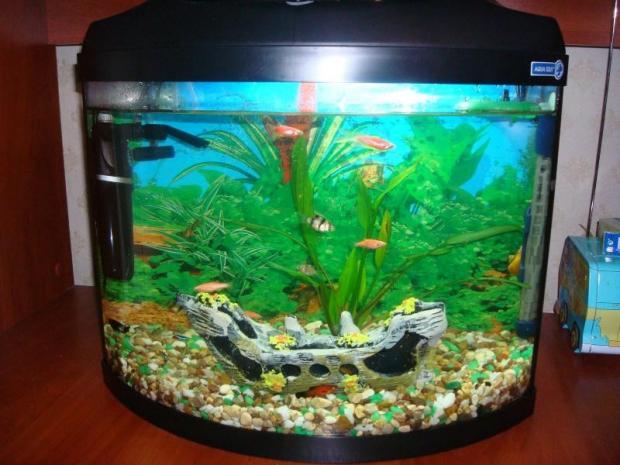 Видео аквариумы