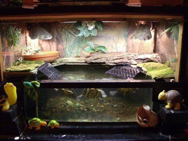 Своими руками в аквариум для черепахи фото 430