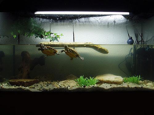 Аквариумы для красноухих черепах своими руками