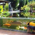 Водный аквариум Space разных размеров и стилей