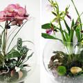 Цветы в аквариуме – прекрасная декорация квартир и других помещений