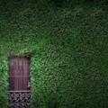 Новый вид бетона создаст вам эффект живых стен здания