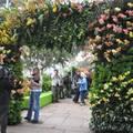 Вертикальное кашпо для орхидей с системой капельного полива