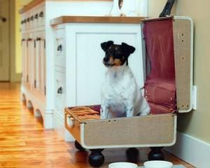 Собачий интерьер, или жизнь в доме с любимыми питомцами