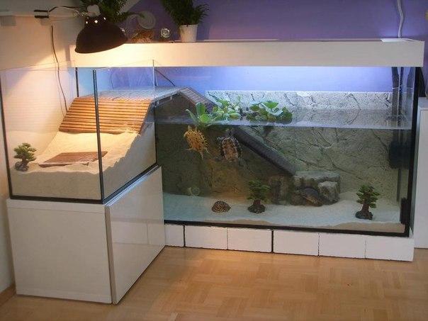 Аквариумы для черепах красноухих фото - Аквариум