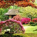 Сад в стиле фьюжн